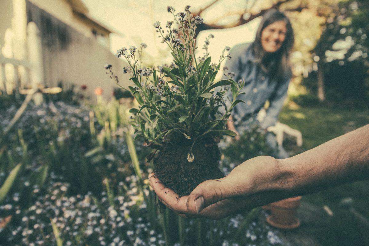 Fresh Gardening Trends for 2019